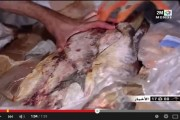 فيديو. حجز أطنان من الأسماك الفاسدة موجهة للفنادق دخلت المغرب عبر ميناء الدارالبيضاء