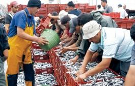 نصف الثروة السمكية بالمغرب يتم تفريغها بميناء الصيد بالداخلة