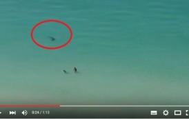 فيديو. لحظة رعب حقيقية لسائحين باغتهما قرش بشاطئ