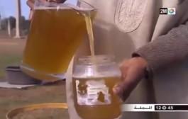 بالفيديو. 'بُـول البَعير' على قناة 'دوزيم' يُشعل مواقع التواصل الاجتماعي