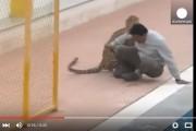فيديو. نَـمرٌ يُهاجم مدرسة بعد فراره من حديقة حيوانات بالهند