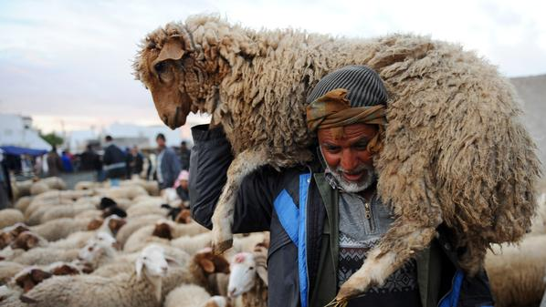 الفلاح ضايع. أسعار اللحوم الحمراء تنخفض لـ50 درهم بعد غلاء الكلأ جراء الجَفاف