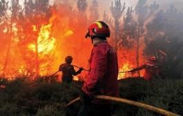 مصرع عنصر بمندوبية المياه والغابات خلال عملية إخماد حريق غابوي قرب المضيق