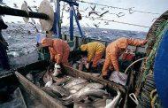 استئناف نشاط الصيد البحري ابتداء من الاثنين المقبل بالموانئ المتوقفة حاليا
