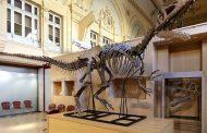 صور | مطالب باسترجاع 'ديناصور' مغربي مسروق و معروض للبيع في باريس بالملايين و وزارة الثقافة في قفص الإتهام