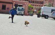 أمن مراكش يحقق في اعتداء على 3 سياح منهم سائحة عضها قرد