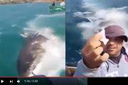 فيديو. مواطنون 'يحتفلون' باصطياد قرش أبيض ضخم ممنوعٌ اصطياده بالحسيمة