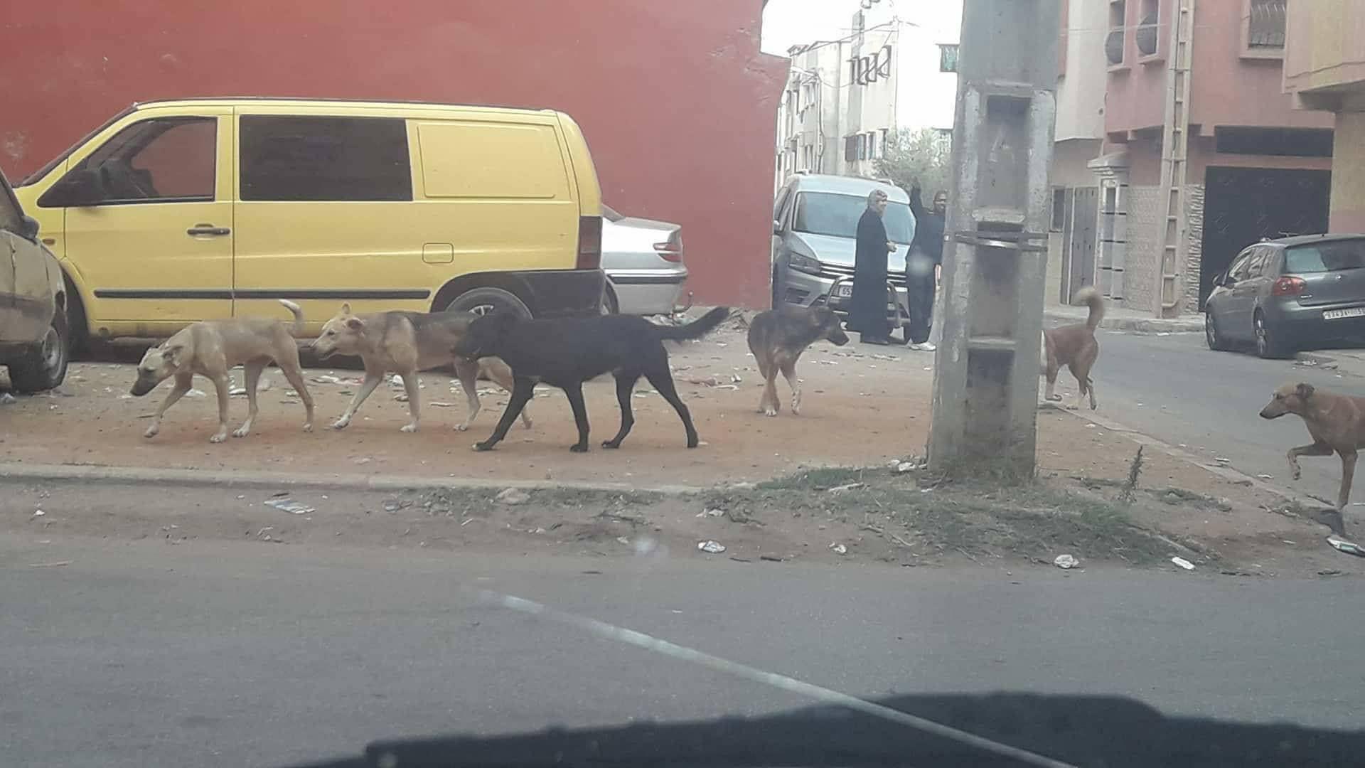 كلاب ضالة تهدد حياة المواطنين بسلا