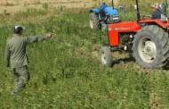 زراعة الحشيش بوزان تقود لاعتقال 6 أشخاص و حجز 7 أطنان من مخدر 'الكيف' !