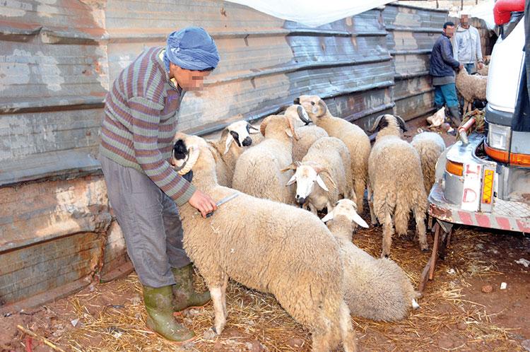 وزارة الأوقاف : 40 يوماً تفصل المغاربة عن 'العيد الكبير' !