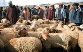 منع نقل و دخول المواشي غير المرقمة إلى الأسواق مع اقتراب عيد الأضحى !