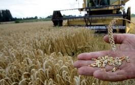 مهنيون : جهة الدار البيضاء أكبر منتج للبذور و تحافظ على الأمن الغذائي للمملكة