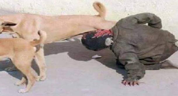 الداخلية: صورة المتشرد يشرب من ثدي كلاب ضالة تعود لشخص في الهند وليس بالمغرب