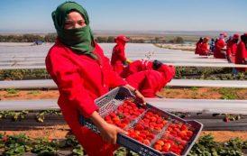 نساء مليلية يتضامنن مع العاملات المغربيات ضحايا الاعتداء الجنسي بحقول الفراولة
