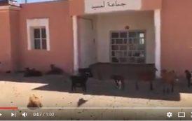فيديو | جماعة مهجورة ببوجدور يسكنها الماعز !