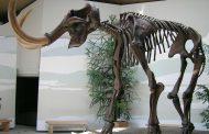 حيوان مهرب من المغرب منقرض قبل 400 مليون سنة يعرض للبيع في فرنسا !