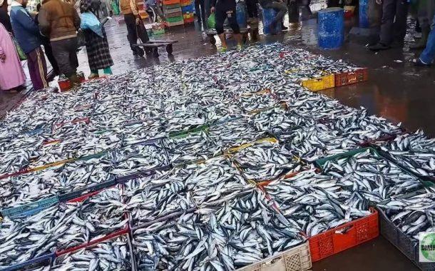 حقائق صادمة: مراقبة السلطات لأسعار السمك غائبة والسردين يُدرُ على الدولة 200مليار سنوياً