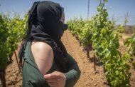 يتيم يطالب بالتحقيق في فضيحة استغلال جنسي لعاملات مغربيات في حقول الفراولة بإسبانيا