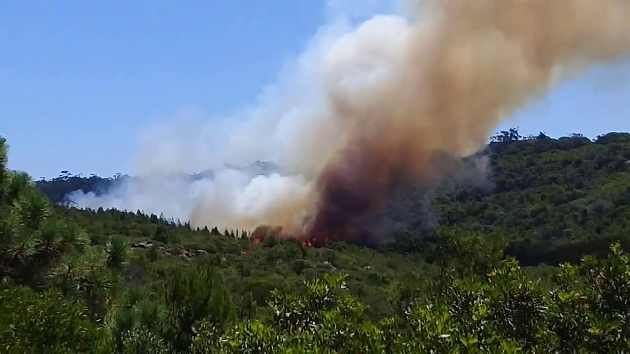 حريق مهول يشب بمئات أشجار غابة مجاورة لشاطئ السعيدية