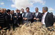 'المغرب الأخضر' يحصد منتوجاً قياسياً من الحبوب قاربٓ 100 مليون قنطار