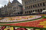 عرض سجاد الزهور .. نصف قرن من الاحتفال بالزهور بالعاصمة البلجيكية بروكسل