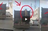 فيديو | لص يحاول سرقة 'حولي' من شاحنة مليئة برؤوس الأغنام و يتظاهر بالمساعدة !