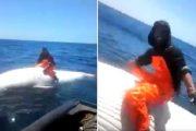 فيديو | صياد مغربي يركب على ظهر حوت ضخم وسط البحر !