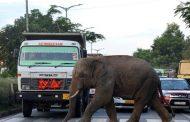 الأرض تخسر 60% من حيواناتها البرية خلال 44 عاماً !