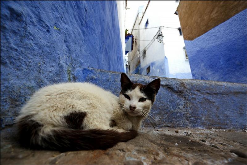 عظة قطة ترسل شخصاً إلى المستعجلات بالحوز !