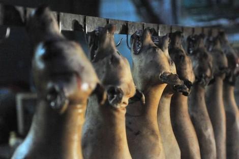 تفاصيل خطيرة حول 'عصابة لحوم الكلاب' ..كانوا يذبحون الأبقار المريضة و الكلاب و يوزعون 'الكفتة' على عربات المأكولات !