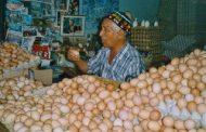 إنتاج المغرب من البٓيض خلال 2018 بلغ 6 مليارات و 600 مليون بيضة