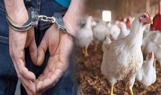 اعتقال 3 أشخاص بورزازات سرقوا دجاجةً و العقوبة قد تصل لـ20 سنة سجناً !