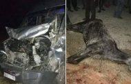 إصابة 5 عاملات و نفوق دابة في حادث سير ضواحي القنيطرة !
