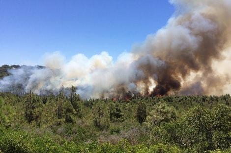 فيديو/ حريق مهول يأتي على غابة المعمورة بتمارة و السلطات تستعين بالطائرات !