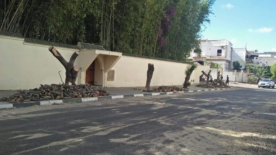 ساكن فيلا فاخرة بالقنيطرة يعدم أشجاراً أمام أعين السلطات و نائب الرباح يتباكى على جدران الفيسبوك !