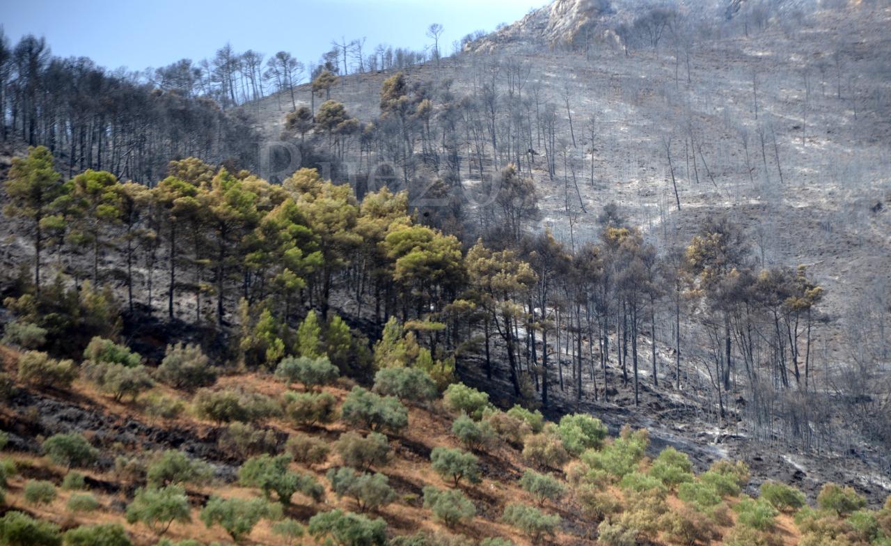 فيديو/شاهدوا ما خلفته الحرائق بغابة تفرسيت باقليم الدريوش بالريف