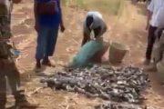 فيديو/خليجيون يرتكبون مجزرة بيئية بقنص ألاف الطيور النادرة ضواحي مراكش