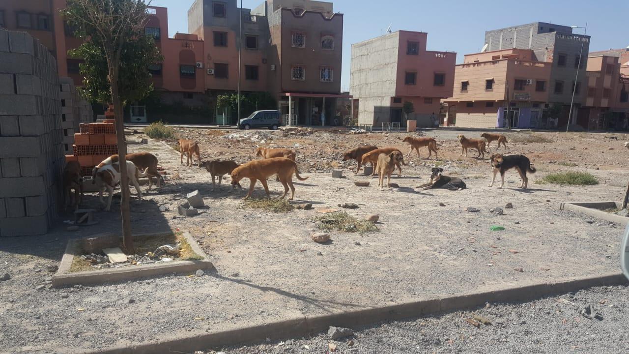 الكلاب الضالة تغزو إمنتانوت و المصل المضاد مفقود !