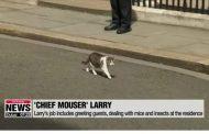 بعد رحلة علاج .. بريطانيا تعلن عودة القط بالمرستون رئيس جهاز مكافحة الفئران !