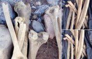 صور/ العثور على عظام بشرية و قطع أثرية تعود لخمسة آلاف سنة بأزيلال !